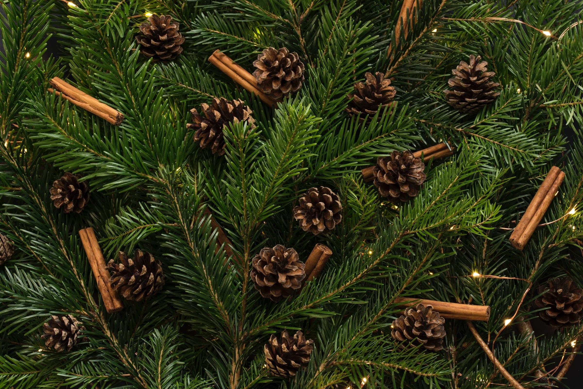 Holiday Tree & Pinecones
